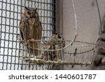 Stock photo owls in a cage at the zoo owl outdoor shot 1440601787