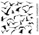 gull silhouette | Shutterstock .eps vector #144068599