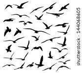 Stock vector gull silhouette 144068605