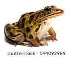 northern leopard frog ... | Shutterstock . vector #144092989