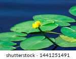 Summer River With Water Lily...