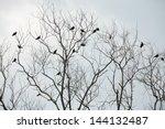 Bird On Dry Tree.