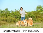 Stock photo young woman walking her adorable akita inu dogs in park 1441562027