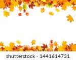autumn leaves on white... | Shutterstock . vector #1441614731