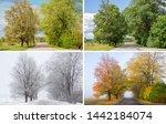 Beautiful Collage Of 4 Seasons...