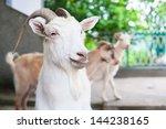 goats | Shutterstock . vector #144238165