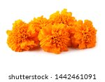 Marigolds isolated on white...