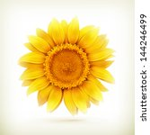 Sunflower  High Quality Vector...