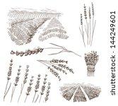 hand drawn lavender flowers... | Shutterstock .eps vector #144249601