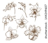 hand drawn orchid flowers... | Shutterstock .eps vector #144249607