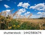 beautiful landscape of grass... | Shutterstock . vector #1442580674