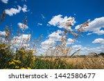 beautiful landscape of grass... | Shutterstock . vector #1442580677