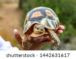 Stock photo close up sulcata tortoise spurred tortoise resting in the garden spurred tortoise on ground with 1442631617