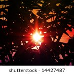 sunset through branches of tree