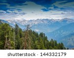 Tall Trees With A View Into Th...