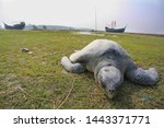 Stock photo the galapagos tortoise it is the largest living species of tortoise 1443371771