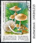 Small photo of HUNGARY - CIRCA 1984: stamp printed in Hungary (Magyar) shows scotch bonnet or fairy ring mushroom (marasmius oreades); edible mushroom series, photogravure, engraved, Scott 2874 A759 1fo, circa 1984