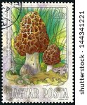 Small photo of HUNGARY - CIRCA 1984: stamp printed in Hungary (Magyar) shows group of common morel mushroom (morchella esculenta) from edible mushrooms series, photogravure, engraved, Scott 2875 A759 2fo, circa 1984