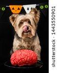 Cute Zombie Dog Eating A Brain...