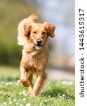 Stock photo portrait of beautiful dog breeds 1443615317