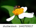 stingless bee colony   that's a ... | Shutterstock . vector #1443705017