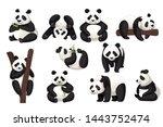 set of cute big panda in... | Shutterstock .eps vector #1443752474