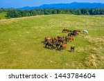 Stock photo horses grazing on pasture aerial view of green landscape with a herd of brown horses and a single 1443784604