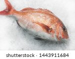 Small photo of Akashi seabream raised in Akashi Strait are one of the most famous and popular seafood in Japan. The most elegant restaurant in Japan insist on Akashi seabream ingredients of the finest quality.