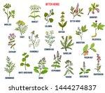 bitter herbs collection. hand... | Shutterstock .eps vector #1444274837