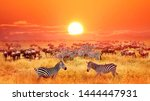 Zebras And Antelopes At Sunset...