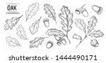 Set Of Oak Leaves And Acorns....