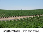 Small photo of View of a remote wine country landscape in central California with wine fields, an inroad, and a tree in the distance