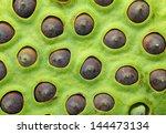 Lotus Seeds Pod Close Up