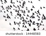 silhouettes of a flock of...   Shutterstock . vector #14448583