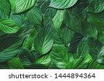 beautiful nature background of...   Shutterstock . vector #1444894364