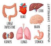 Human Anatomy Organs. Brain ...