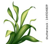 creative foliage  illustration... | Shutterstock . vector #144504809
