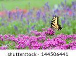 Colorful Butterfly On Pink...