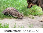 Stock photo dog and cat playing on the grass 144513377