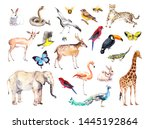 Big Set Of Wild Animals  Birds...