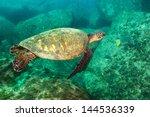 Sea Turtle Swimming In The...
