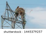 Hawk perched on power line nest
