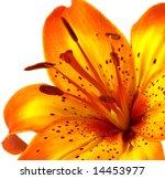 Macro Yellow Orange Lily...