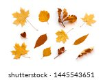 yellow autumnal leaves flat lay.... | Shutterstock . vector #1445543651