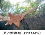 Underbelly Of Sawfish Swimming...