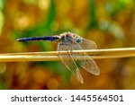 Stock photo showing of eyes dragonfly and wings detail beautiful dragonfly in the nature habitat 1445564501