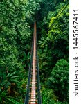 Vertical View Of Doi Tung Tree...