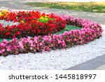 A Flower Bed Of Flowers In The...