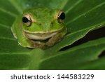 treefrog | Shutterstock . vector #144583229
