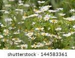 Harebell Flowers  Dandelions ...